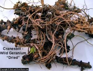 Cranesbill-Wild Geranium – Geranium maculatom