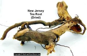 Red Root - New Jersey Tea Root - Ceanothus americanus